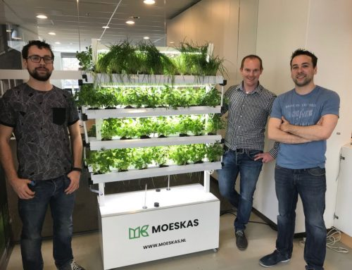 Groen in bedrijfskantine
