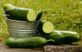 komkommers in emmer, platteland, gezond