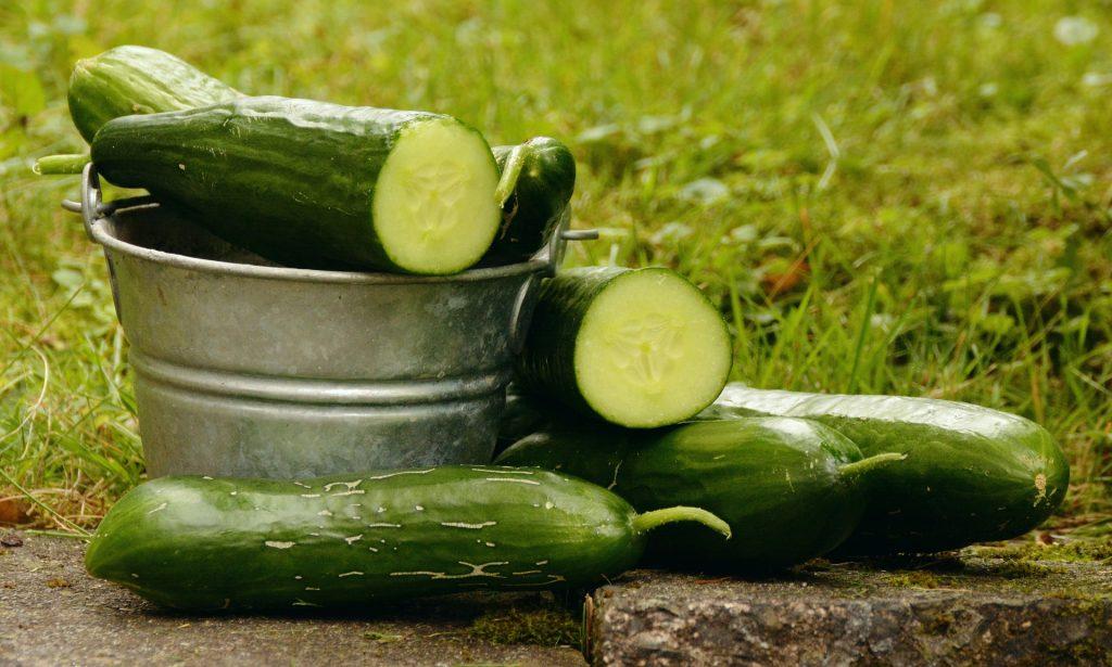 cucumbers 1588945 1920 e1530100925961 - Blog