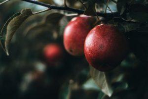 Foto Duurzaamheid 300x200 - Duurzaamheid: groenten en fruit uit het seizoen