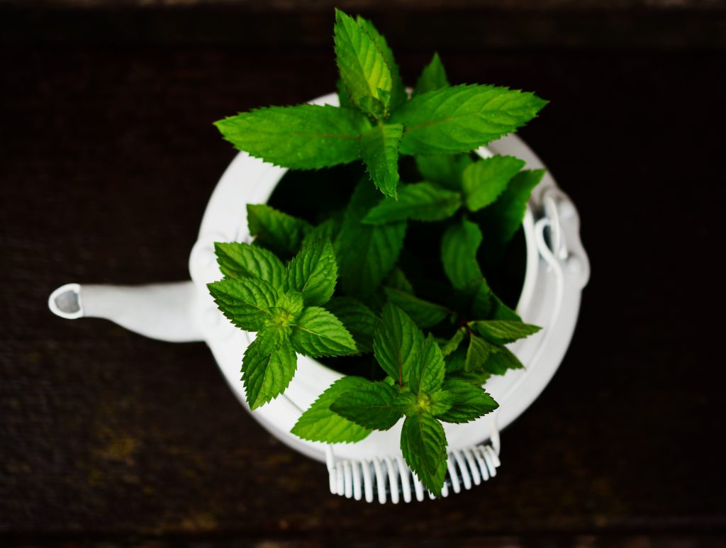 close up freshness green 531260 1024x773 - Drie voordelen van kruiden voor je gezondheid